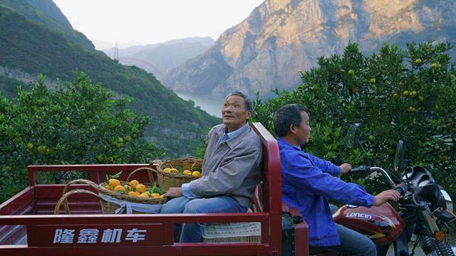最美三峡移民旧照:22年前,板车上的3000公里和5万棵树