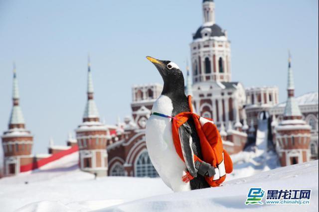 哈尔滨冰雪季促销活动在广东启动 广东游客与冰城市民享同等优惠