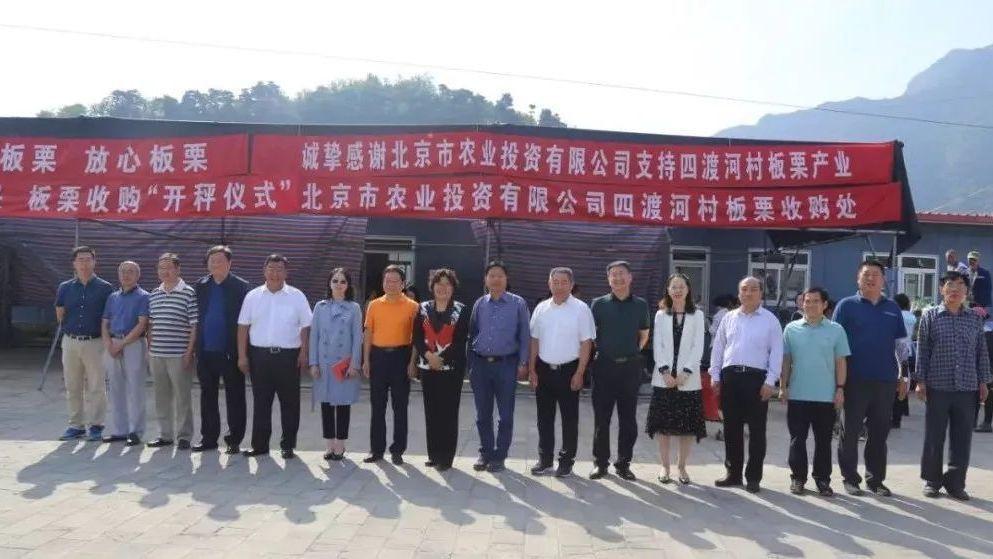 """一条增收路,三年帮扶情,渤海镇低收入村的板栗收购""""开称"""""""