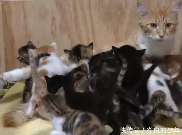 橘猫感觉生了14个小猫崽喂奶时表情亮了:妈妈热迪丽包问表巴情疑图片