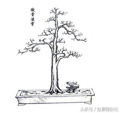 简笔画 盆景 盆栽 手绘 线稿 植物 490_458