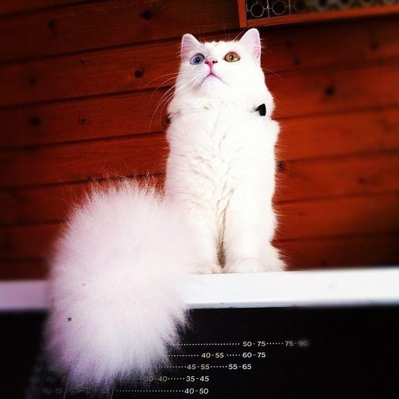 渴望有一只猫咪的时候,总有人溜个弯都能捡到这样的异瞳小可爱!