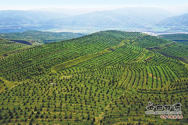 绿水青山就是金山银山?定西市林业生态建设综述