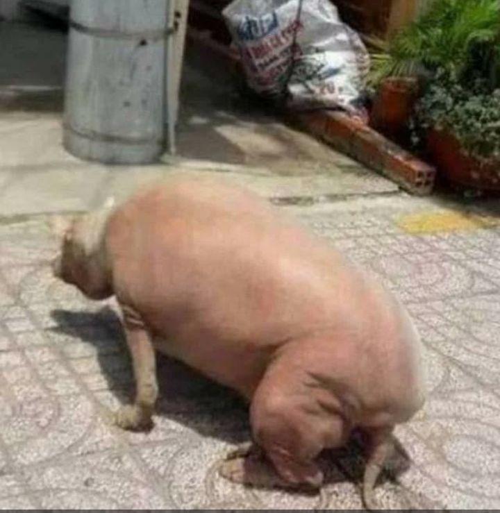 梦见男友家杀了一头猪