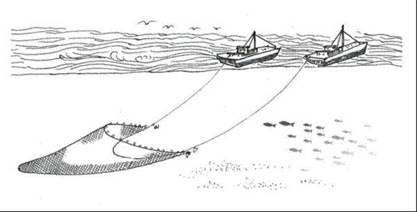 海洋经济简笔画手抄报