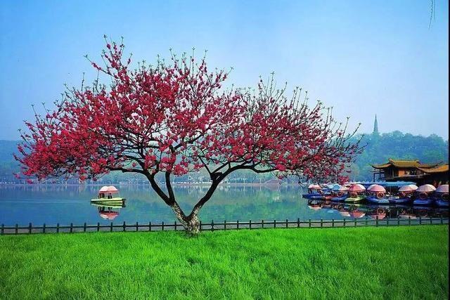 柳树冒芽,桃花绽放……西湖边找春天去啦!攻略收好!