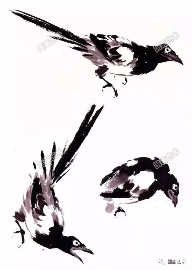 教程  写意禽鸟之喜鹊的画法解析