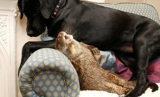 这两只不同种类的动物竟建立了最亲密的感情,看小水懒这霸道劲