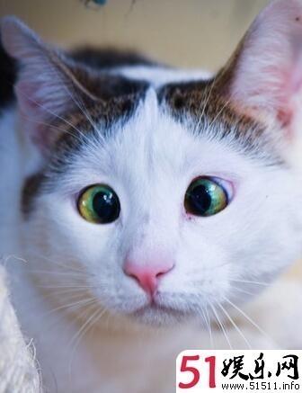 流浪猫天生斗鸡眼呆萌表情让它成网红星沙泉塘羽毛球图片