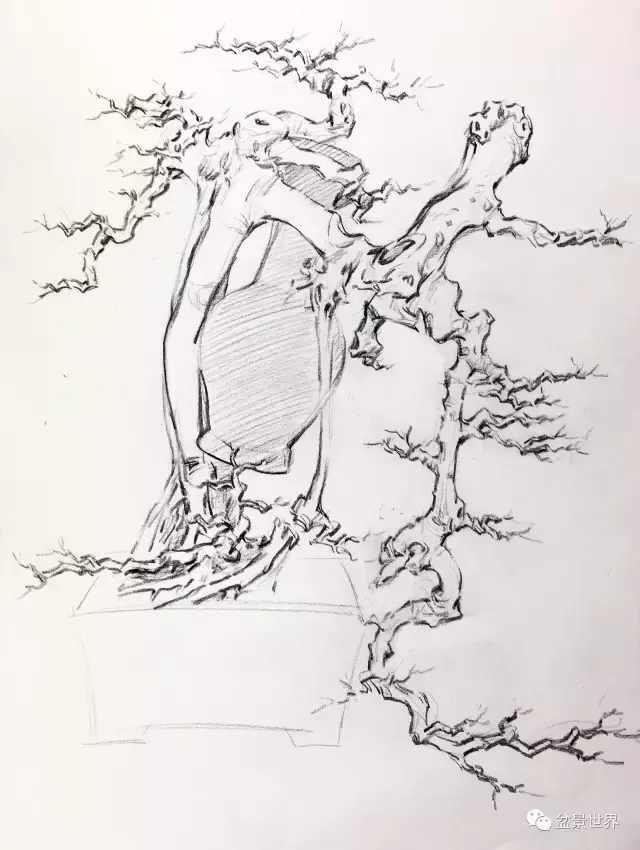 树根简笔画