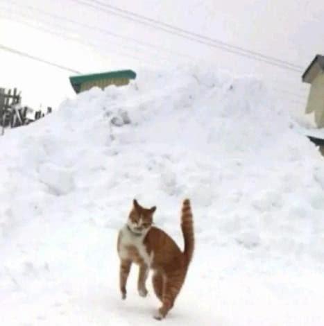 可爱猫猫图片雪地