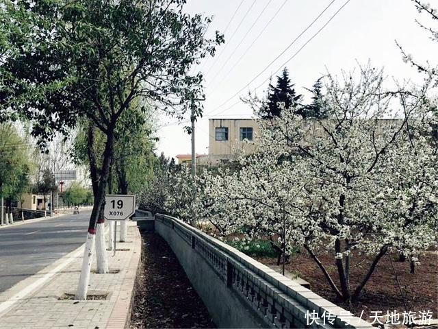 洛阳新安县两千亩樱桃花开,磁涧镇礼河村八里花廊等你