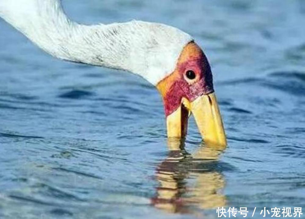 嘴大 魚 手繪