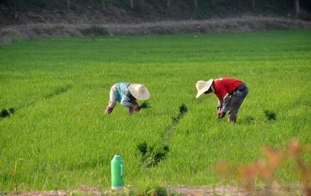 从小我家就穷,父母都是地地道道的庄稼人,除了整日守着那几亩薄田填饱