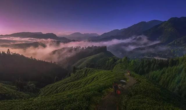 图片摄影@杨晓川 茶山的风景要数清晨或傍晚最佳,这两个时段,整个