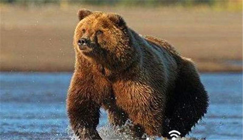 世界上最恐怖的动物,有一些还会出现在我们身边,你知道吗?