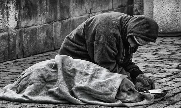 上图中天开始淅淅沥沥地下起了小雨,流浪者怕熟睡中的狗狗被淋湿感冒