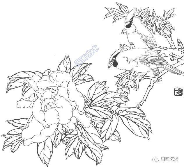 一组工笔花鸟白描画稿,真漂亮!