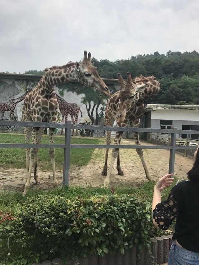 野生动物最全,稀奇古怪的动物都有,贵阳扎佐野生动物园游记