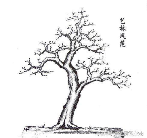简笔画 盆景 盆栽 手绘 线稿 植物 490_461