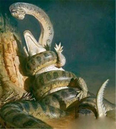 亚马逊森蚺下水,水里的动物都要跑,鳄鱼跑慢了都只能被森蚺吞食