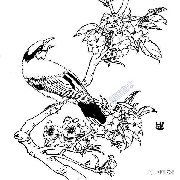 梨花圖片簡筆畫手繪