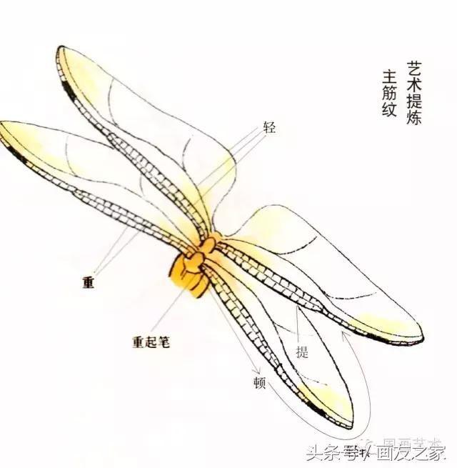 蜻蜓的工笔及写意画法,太全面了!