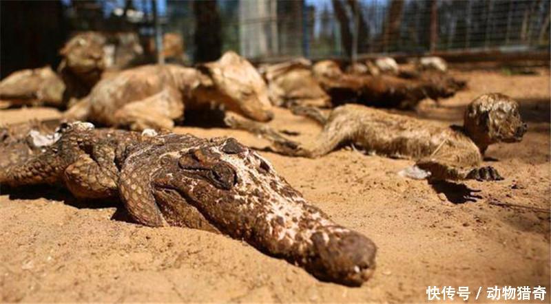 这所动物园对于这些动物来说,简直就是噩梦,是牢笼.