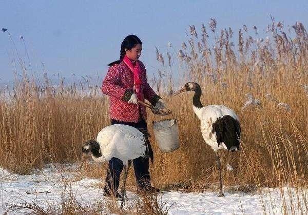 27年前用生命保护丹顶鹤的女孩徐秀娟弟弟也因保护丹顶鹤壮烈牺牲