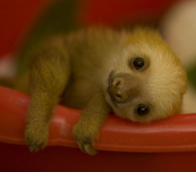 镜头下:动物们刚出生的样子,可爱到心都快融化了