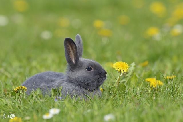 属兔人运势最活跃的时候,他们通常在这个时候能够遇到突如其来的好运