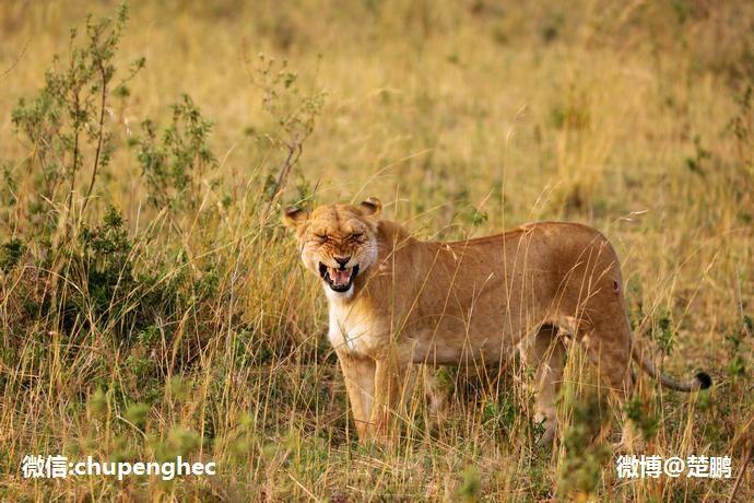 动物大迁徙,世上最壮观的自然奇迹