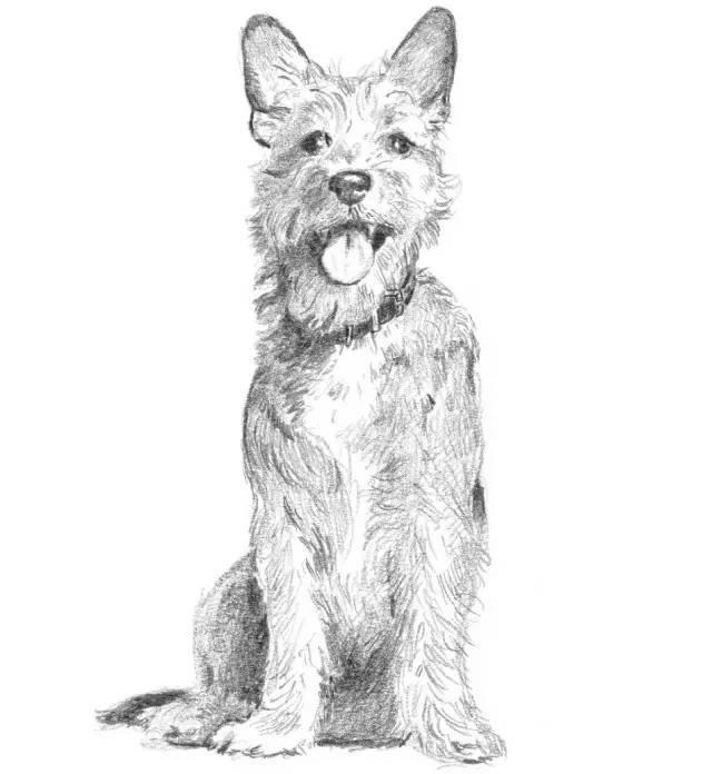 【零基础素描】可爱的小狗狗的绘画步骤