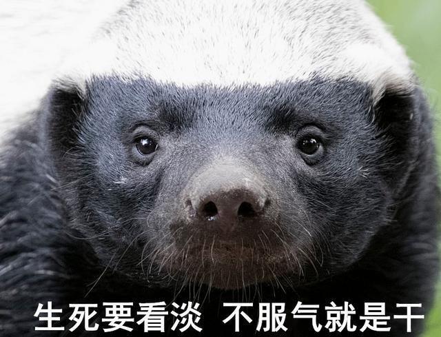 蜜罐姑娘_蜜罐动物_动物蜜罐平头哥图片