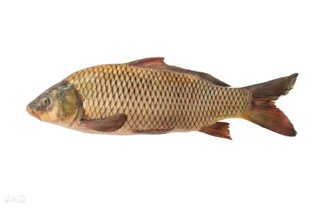 盘点中国老百姓餐桌上最常见的食用鱼
