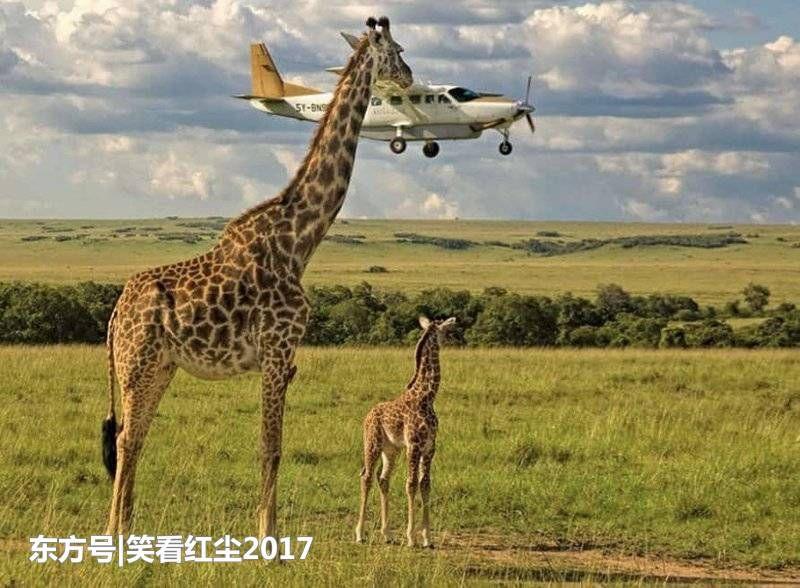 2017年,20个最有趣的动物图片