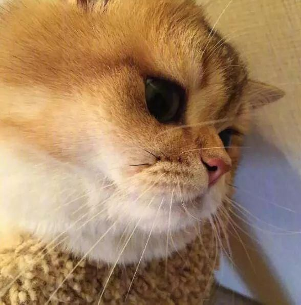 一只大脸猫的悲伤,难过得像200斤橘猫制作音怎么视频抖表情包动画图片