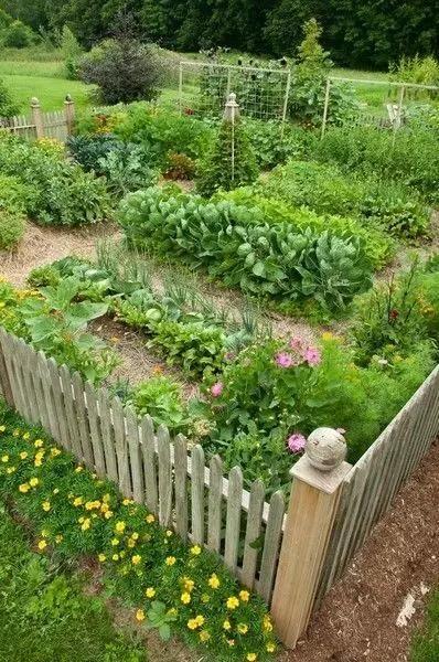 在农村后院种菜又养花,民间最实用的方法图片