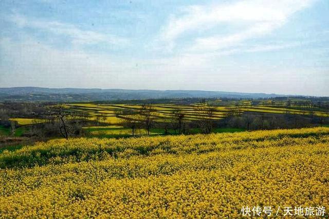 油菜花开的季节!新安县磁涧镇东皇村,看油菜花海