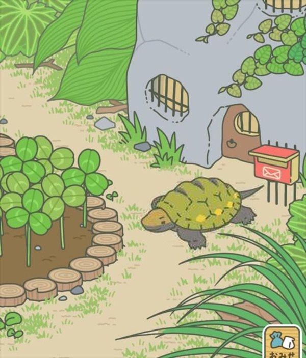 旅行食物青蛙乌龟及喂养攻略曝光夏季名字a食物周赛图片