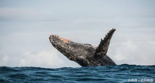 南非海怪,于1922年出现于南非海岸地区的巨大未知生物遗骸,这一发现