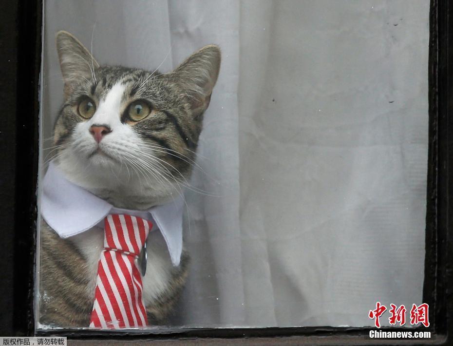 壁纸 动物 猫 猫咪 小猫 桌面 930_710