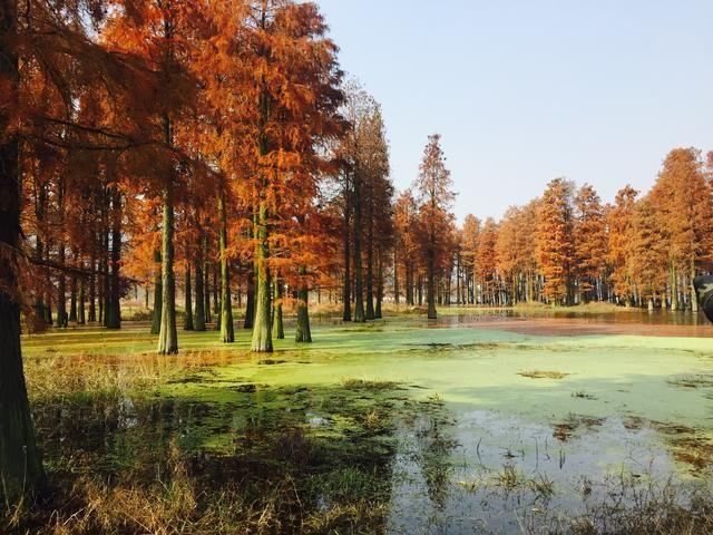 四明湖位于四明山北部余姚梁弄镇,推荐旅游时间11月下旬到12月中旬
