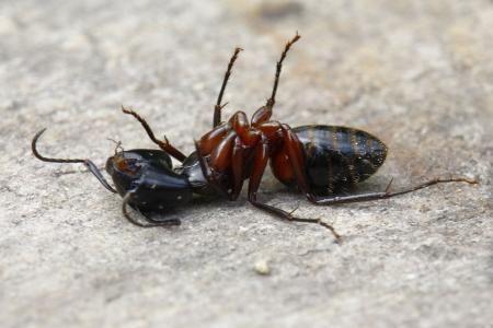 我们观察蚂蚁的结构,发现它们的社会性,发现它们有自己的交流方式