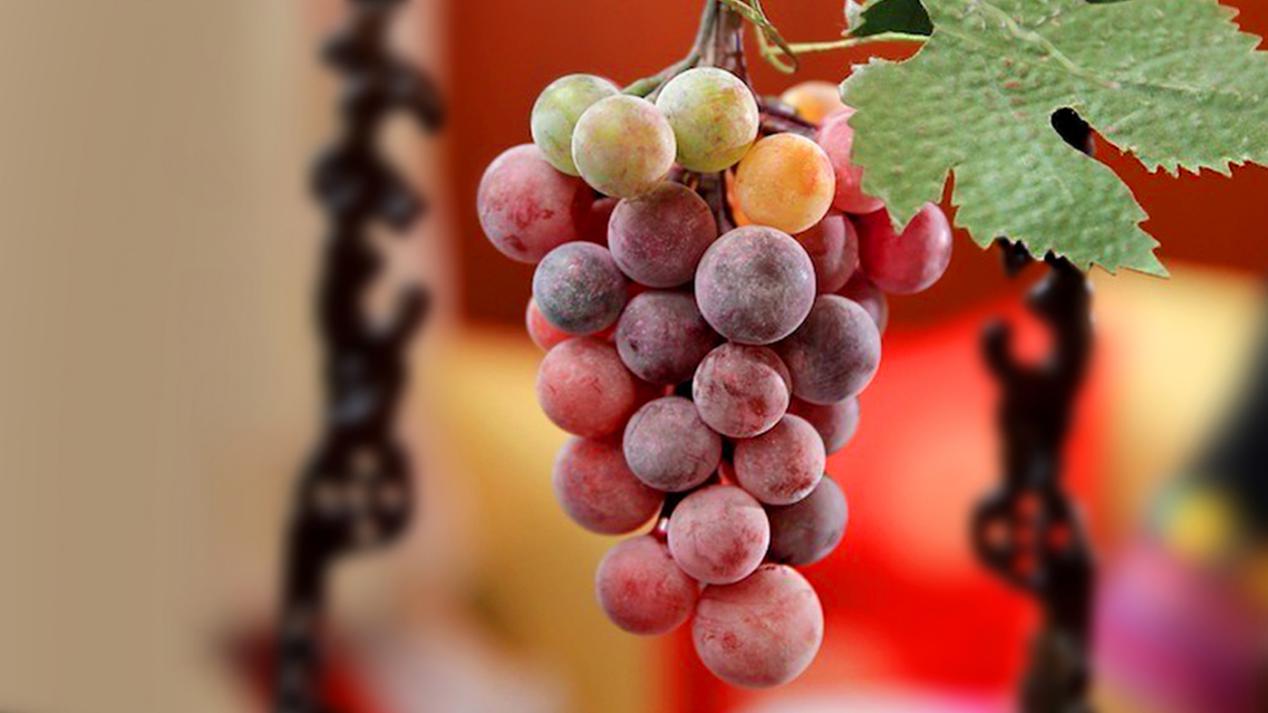 毛主席点名要保护好葡萄常 为传承手艺家族五位女士终身未嫁