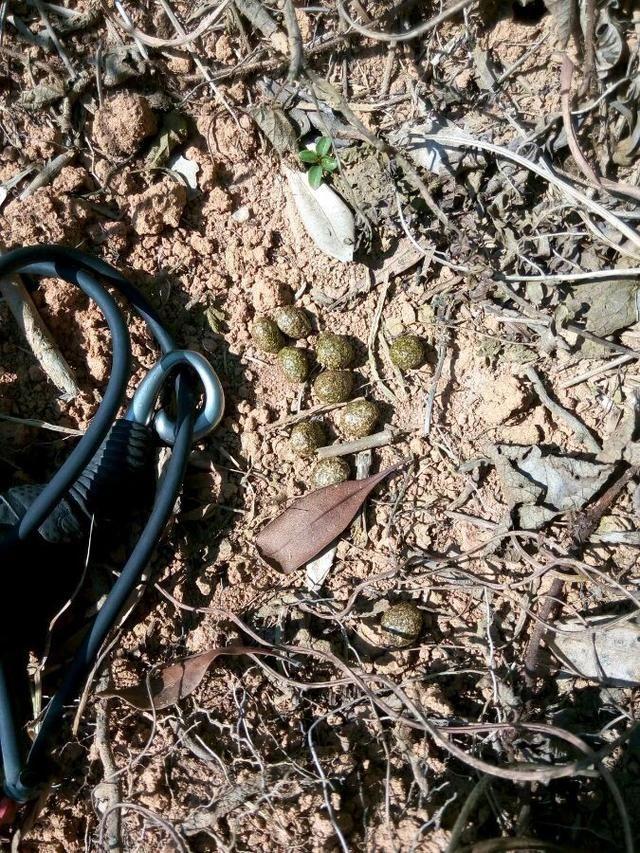 72岁老猎人亲述野外狩猎技巧陷阱的设置及动物踪迹的寻找