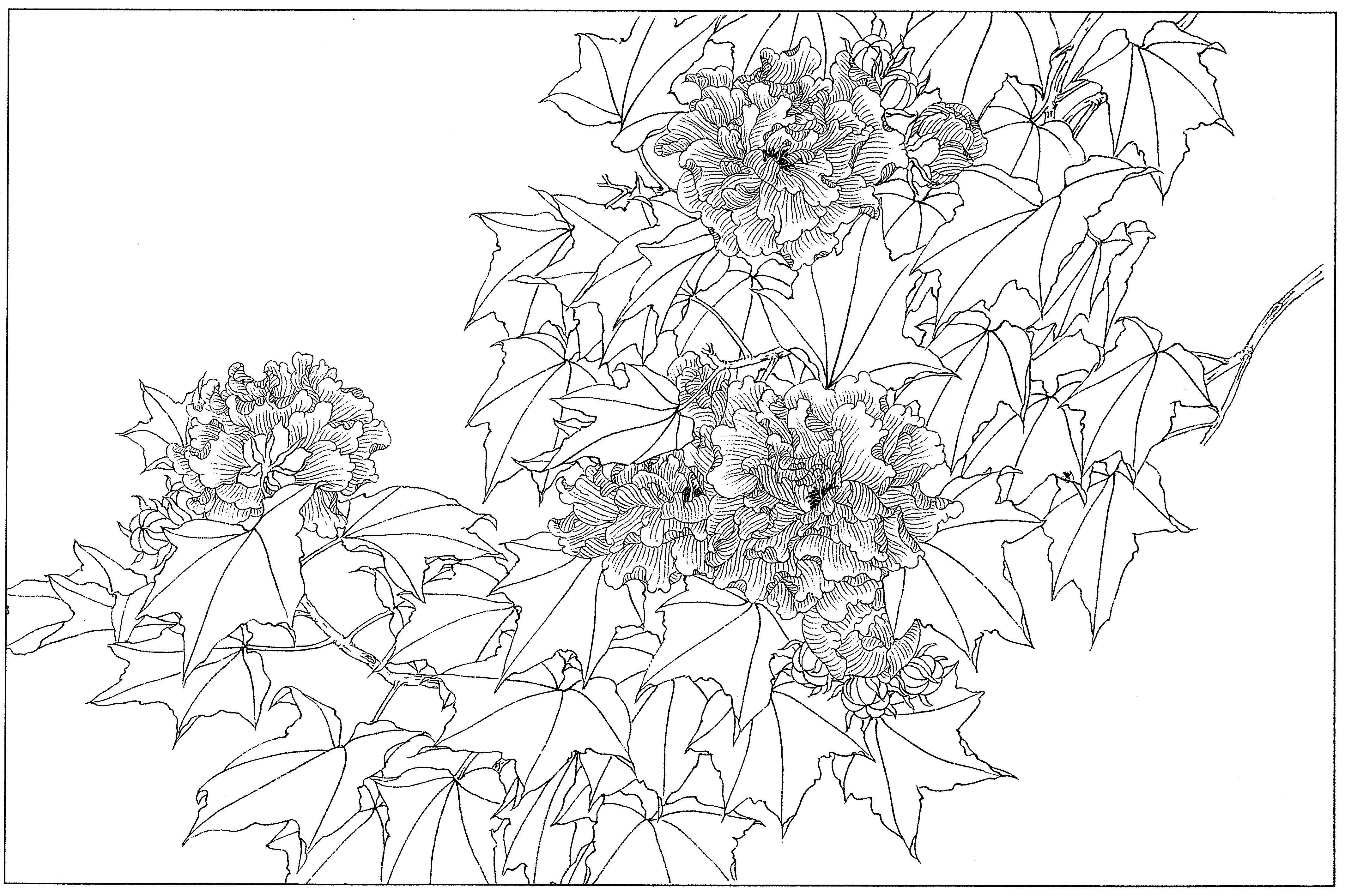 芙蓉花鸟高清工笔花卉白描线稿丨手绘素材上色练习