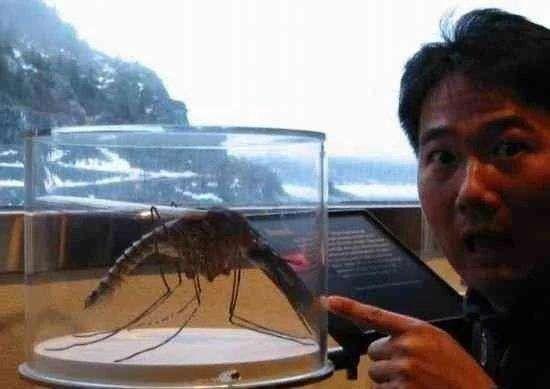 全球八大动物之最 最大的蚊子遇上最大的青蛙