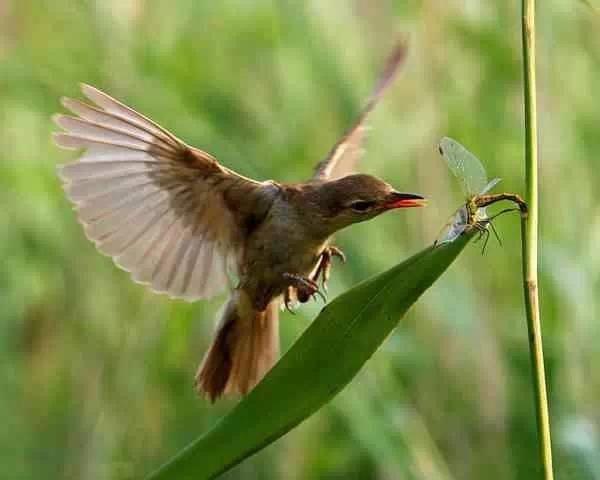 壁纸 动物 昆虫 鸟 鸟类 雀 桌面 600_480