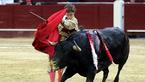 斗牛士遭牛疯狂攻击 伤口15厘米竟还坚持